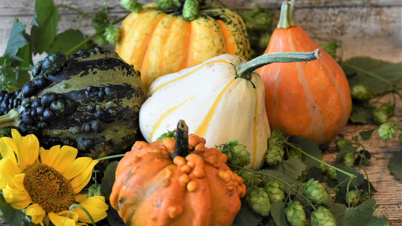 Herbst Erntedank Halloween - Geschirrverleih Berlin
